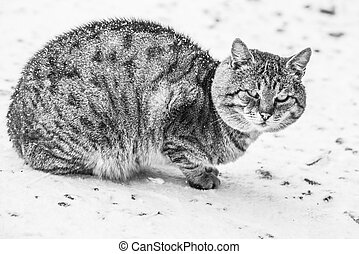 Grey cat outdoors in winter