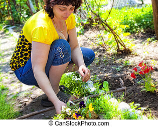Gardening - mature woman planting flowers in backyard garden