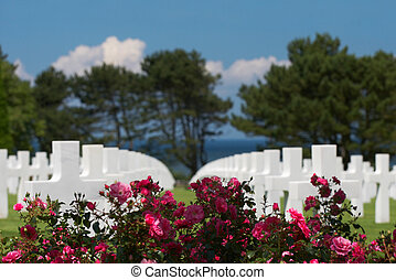Roses and graves - Graves at the American cemetery in...