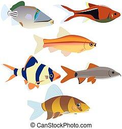 Aquarium fish-2