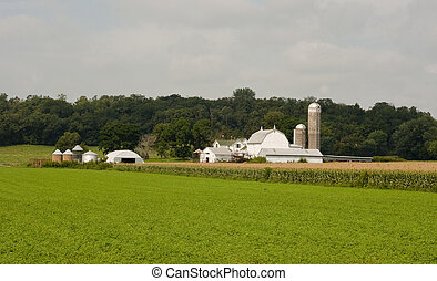small midwest dairy farm - midwest dairy farm with crops on...