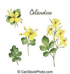 Hand drawn watercolor vector botanical illustration of...