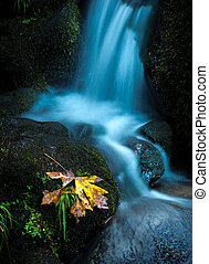 Watson Creek Oregon Fall Colors - Oregon Cascades Fallen...
