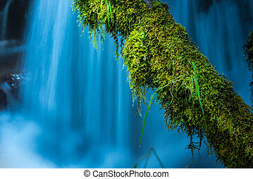 Moss Covered Tree against blue cascade Watson Creek Oregon -...
