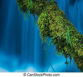 Moss Covered Tree against blue cascade Watson Creek Oregon -...