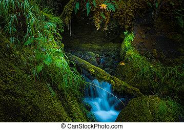 Oregon Cascades Watson Creek Oregon - Oregon Cascades Thick...