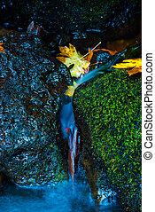 Oregon Autumn Fallen Maple Tree Leaves Watson Creek Oregon -...