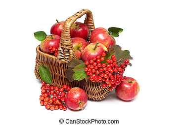 red apples and viburnum berries in a basket on a white...