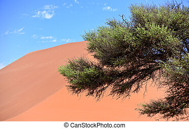 sand dune - tree against sand dune and blue sky