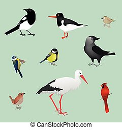 Bird collection - collection of wild birds like a blue tit,a...