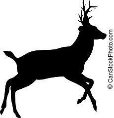 deer on a white background - Beautiful noble proud sika deer...