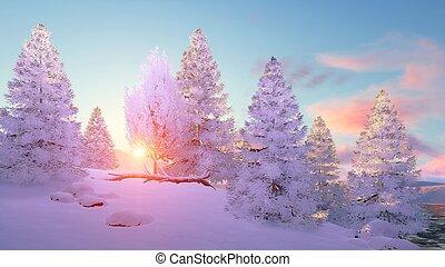 Snowy winter fir tree forest at sunset - Calm winter...