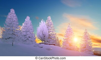 Snowy winter fir forest at scenic sunset - Winter scenery...