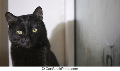 black cat sitting on a windowsill and looking at the misted...