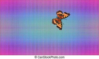 Video Butterfly Vanessa atalanta rainbow checkered background