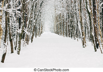 Picturesque snowy alley - Empty scenic snowy alley, winter...