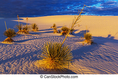 White sands - Unusual White Sand Dunes at White Sands...