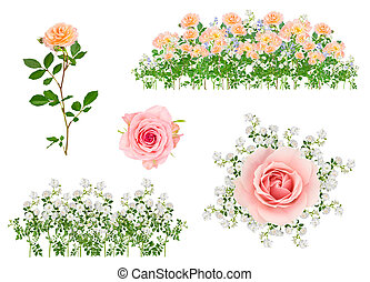 Arranged isolated flowers
