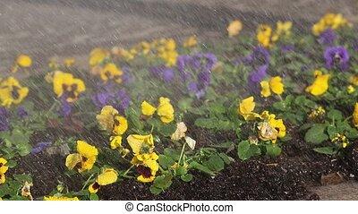 rain on violet