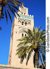 history maroc africa palm and the blue - in maroc africa...