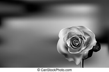 Delicate Black and white Rose on a blurred green background