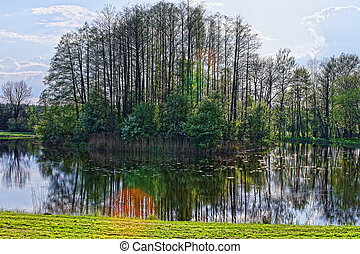 Trees mirrored in pond in Bialowieza National Park in Poland...