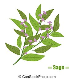 Herbs illustration with cute sage