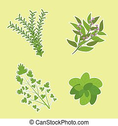 Herbs illustration with basil, parsley, rosemary, and sage