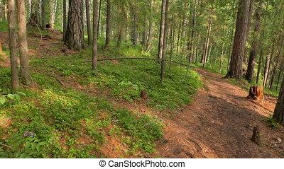 Walking trail in the coniferous forest. Russia. UltraHD (4K)