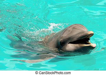Happy smiling dolphin - Happy dolphin swimming in blue water