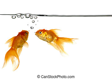 waterline and gold fish - Waterline with small air bubbles...