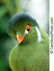 Green bird - Portrait of a exotic bird with green plumage