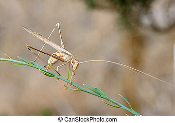 Closeup of the nature of Israel - grasshopper...