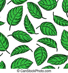 Mint vector drawing seamless pattern. Isolated  plant and leaves