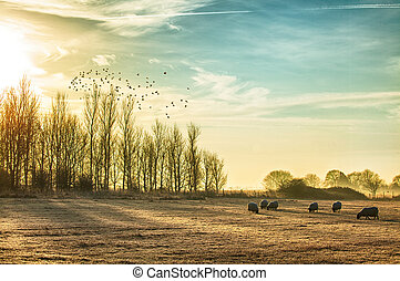 Sheep in a rural sunrise landscape