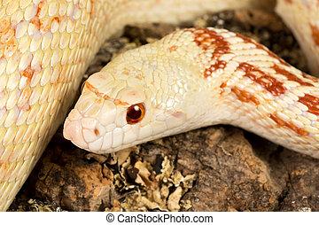 ojos, serpiente