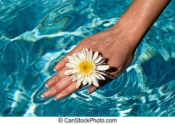 Women\'s hand in the water pool flowers.