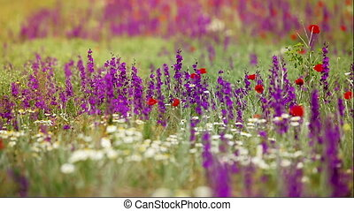 Landscape from meadow flowers - The landscape of wild...
