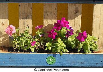 Blumenkasten  aus Holz mit Sommerblumen