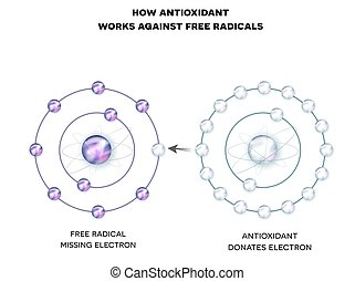 How antioxidant works against free radicals. Antioxidant...