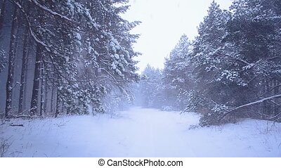 Snowfall in coniferous forest, snow falling from trees, the wind