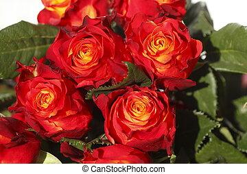 Rote Rosen auf einem Blumenmarkt