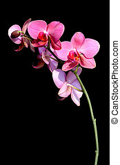 Beautiful orchid - Beautiful orchid, unlit background
