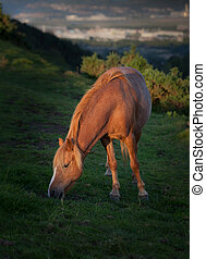 Horse at sunset - Horse grazing on Kilvey Hill overlooking...
