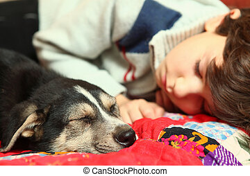 boy and little puppy sleep on the bed