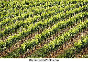 vinho, filas