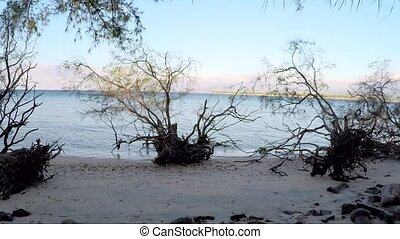 Time Lapse view of trees on sandy shore