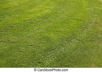 Wiese mit Rasen - Frisch gemähter Rasen, Deutschland