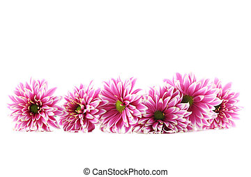 Bouquet of chrysanthemum flowers isolated on a white