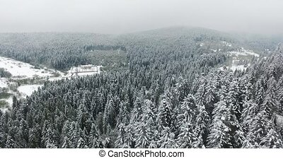 White from snow woods. View from the top of mountain